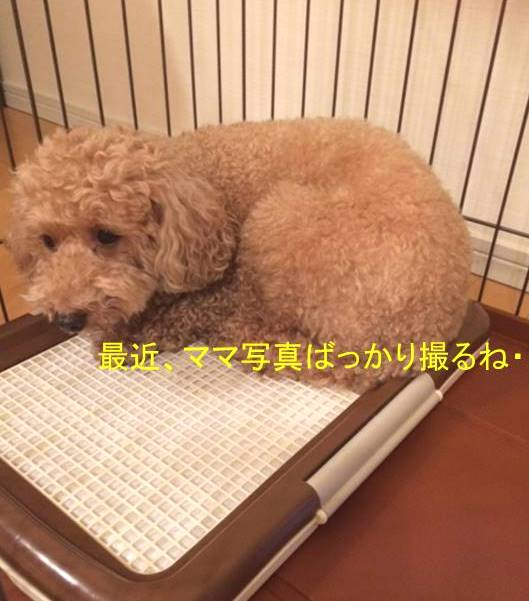 f:id:nanachan59:20171014145327j:plain