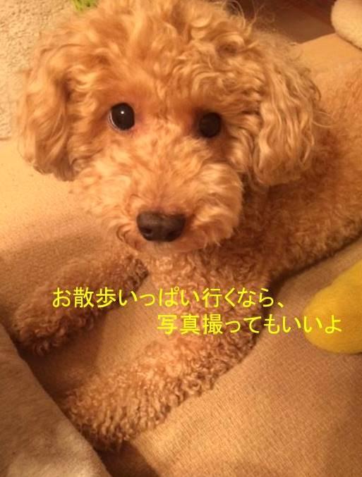 f:id:nanachan59:20171014150017j:plain