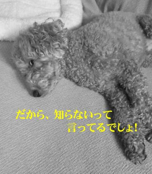 f:id:nanachan59:20171015185751j:plain