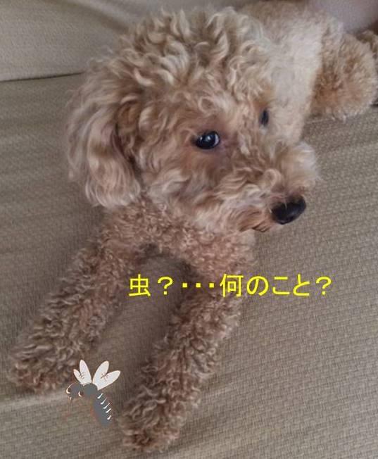 f:id:nanachan59:20171015210259j:plain