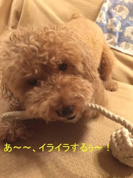 f:id:nanachan59:20171016180840j:plain