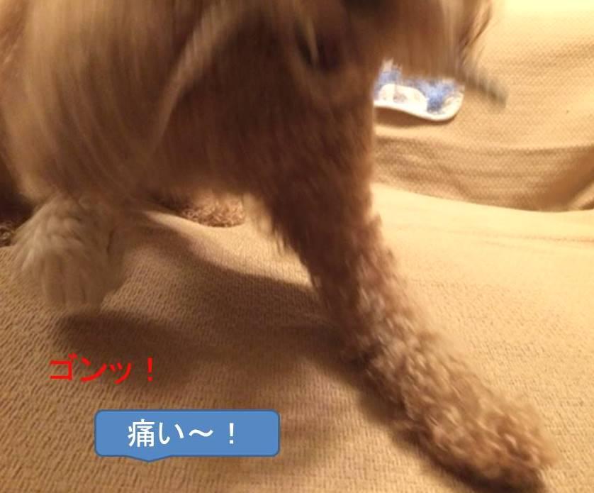 f:id:nanachan59:20171016181704j:plain