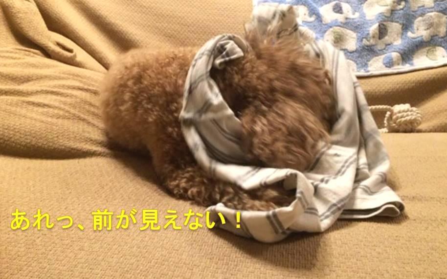 f:id:nanachan59:20171016202906j:plain