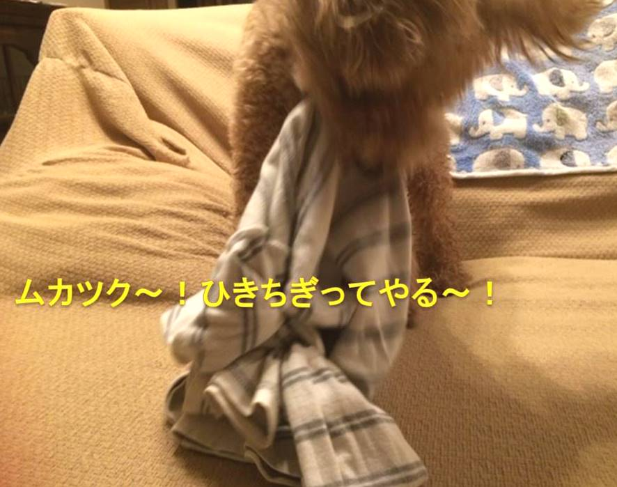 f:id:nanachan59:20171016203305j:plain