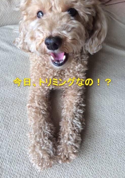 f:id:nanachan59:20171017164500j:plain