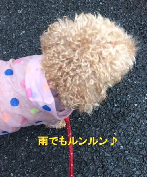 f:id:nanachan59:20171017164943j:plain