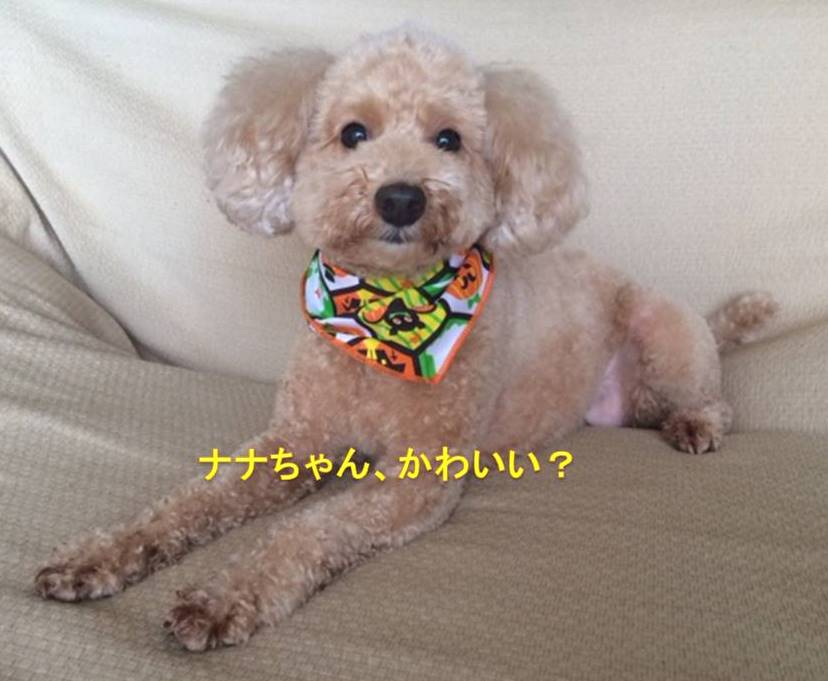 f:id:nanachan59:20171017165617j:plain