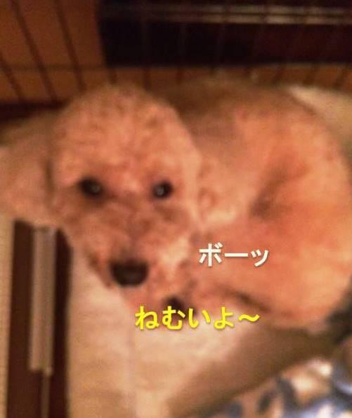 f:id:nanachan59:20171018032401j:plain