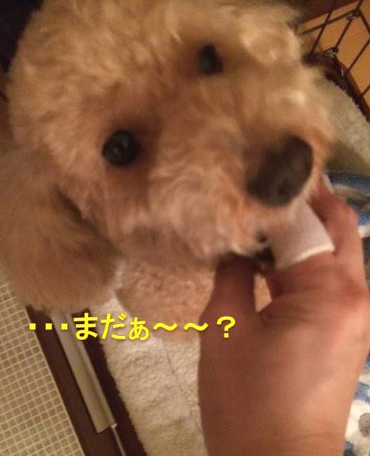 f:id:nanachan59:20171018033130j:plain