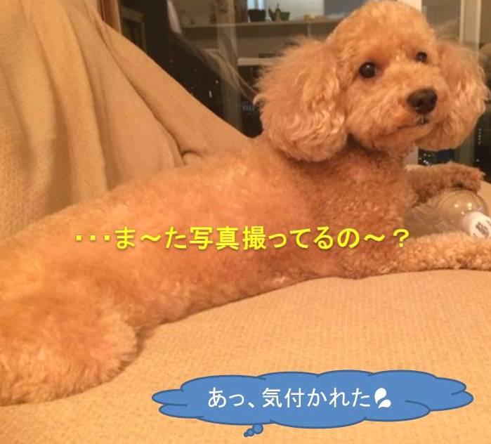 f:id:nanachan59:20171019125301j:plain