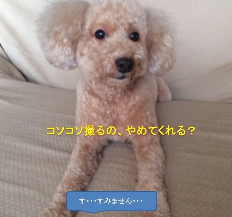 f:id:nanachan59:20171019131607j:plain