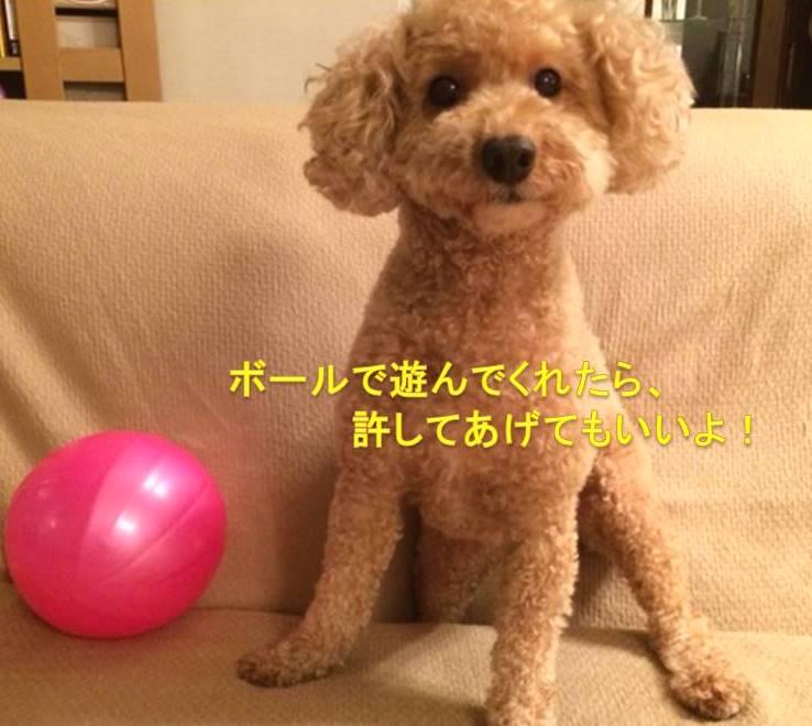 f:id:nanachan59:20171019180911j:plain