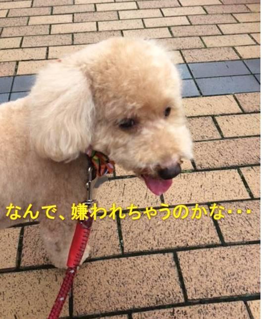 f:id:nanachan59:20171020144526j:plain