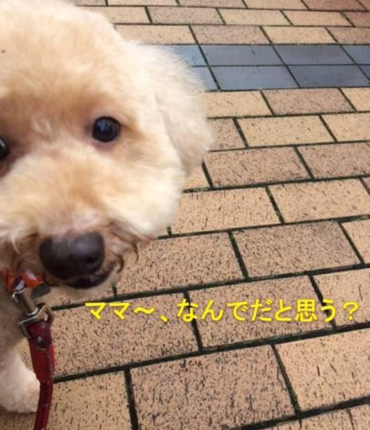 f:id:nanachan59:20171020144945j:plain