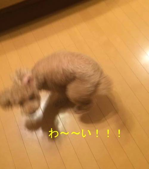 f:id:nanachan59:20171020151106j:plain
