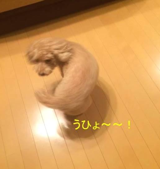 f:id:nanachan59:20171020151440j:plain