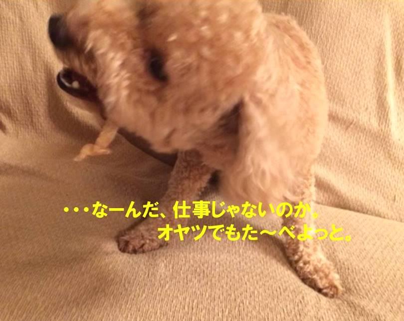 f:id:nanachan59:20171021175332j:plain