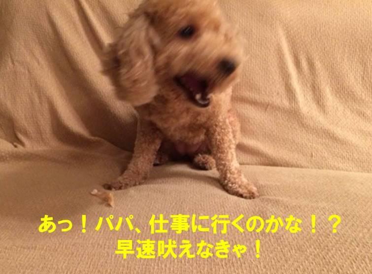 f:id:nanachan59:20171021225401j:plain