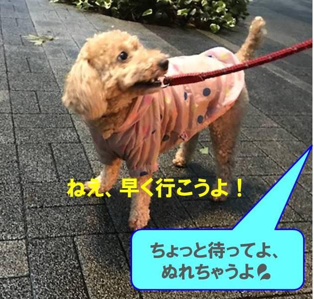 f:id:nanachan59:20171022193200j:plain