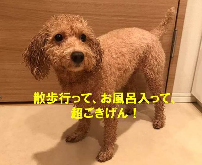 f:id:nanachan59:20171022193504j:plain