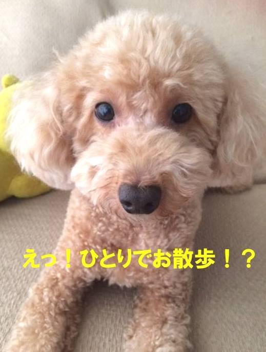 f:id:nanachan59:20171023101343j:plain