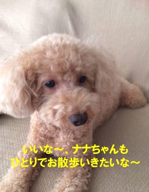 f:id:nanachan59:20171023101807j:plain