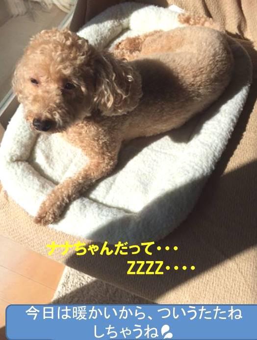f:id:nanachan59:20171023175308j:plain
