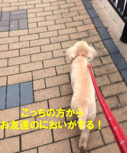 f:id:nanachan59:20171024202122j:plain