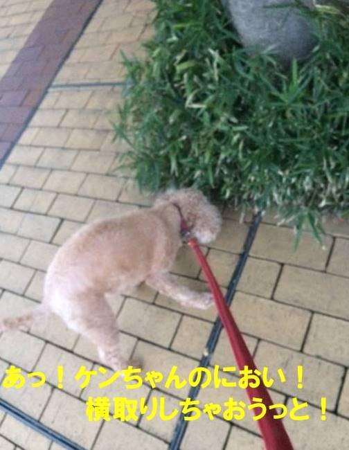 f:id:nanachan59:20171024202618j:plain