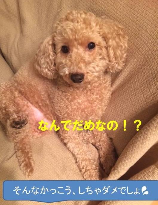 f:id:nanachan59:20171024203655j:plain