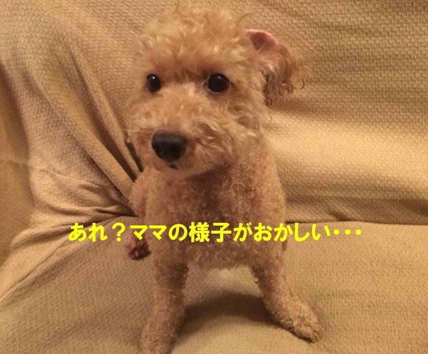 f:id:nanachan59:20171025180220j:plain