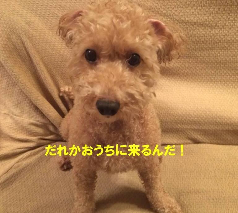 f:id:nanachan59:20171025180918j:plain