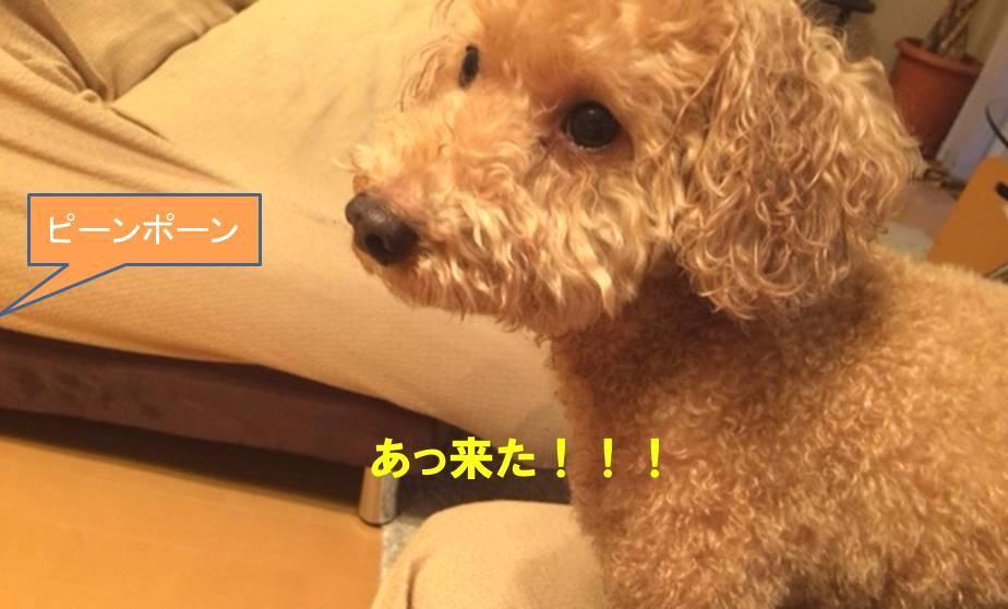 f:id:nanachan59:20171025181552j:plain