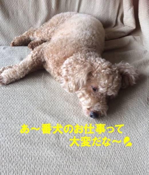 f:id:nanachan59:20171025203004j:plain