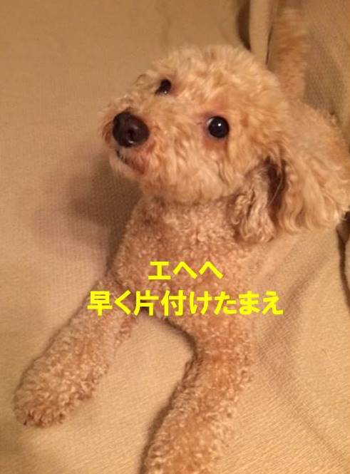 f:id:nanachan59:20171025212014j:plain