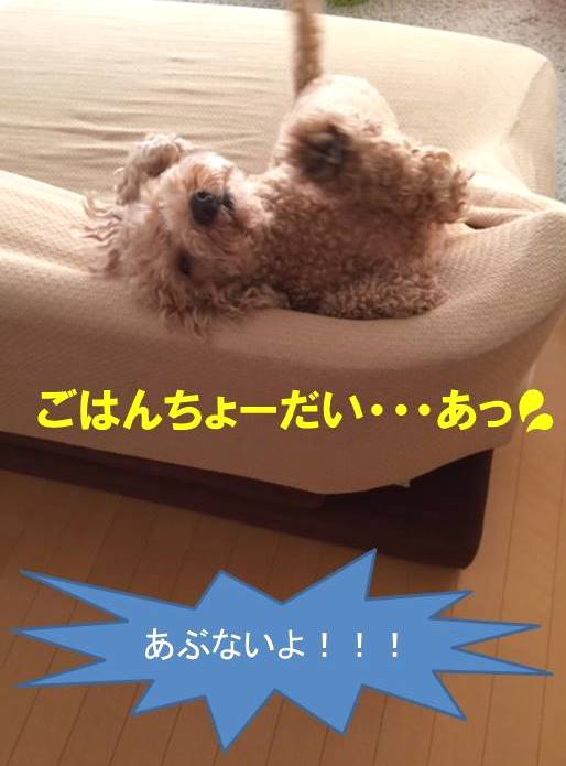 f:id:nanachan59:20171026151507j:plain