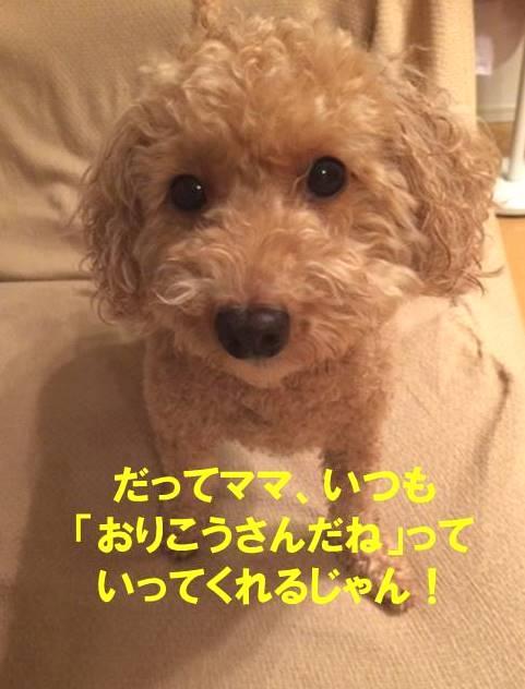 f:id:nanachan59:20171026152139j:plain