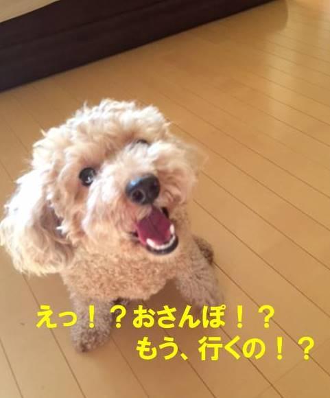 f:id:nanachan59:20171027192117j:plain
