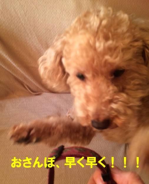 f:id:nanachan59:20171027194617j:plain