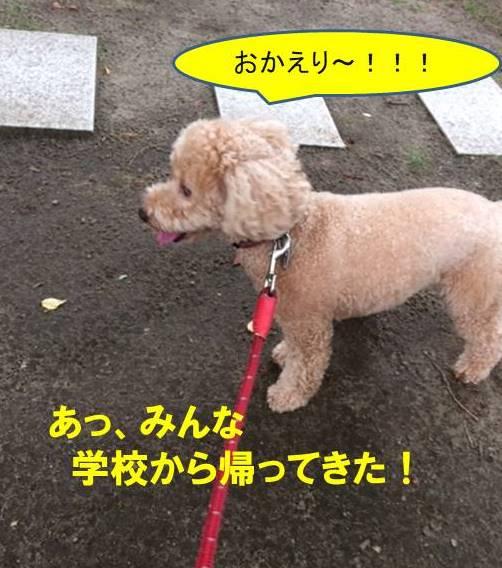 f:id:nanachan59:20171027195347j:plain