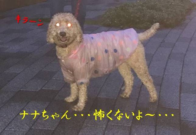 f:id:nanachan59:20171027212632j:plain