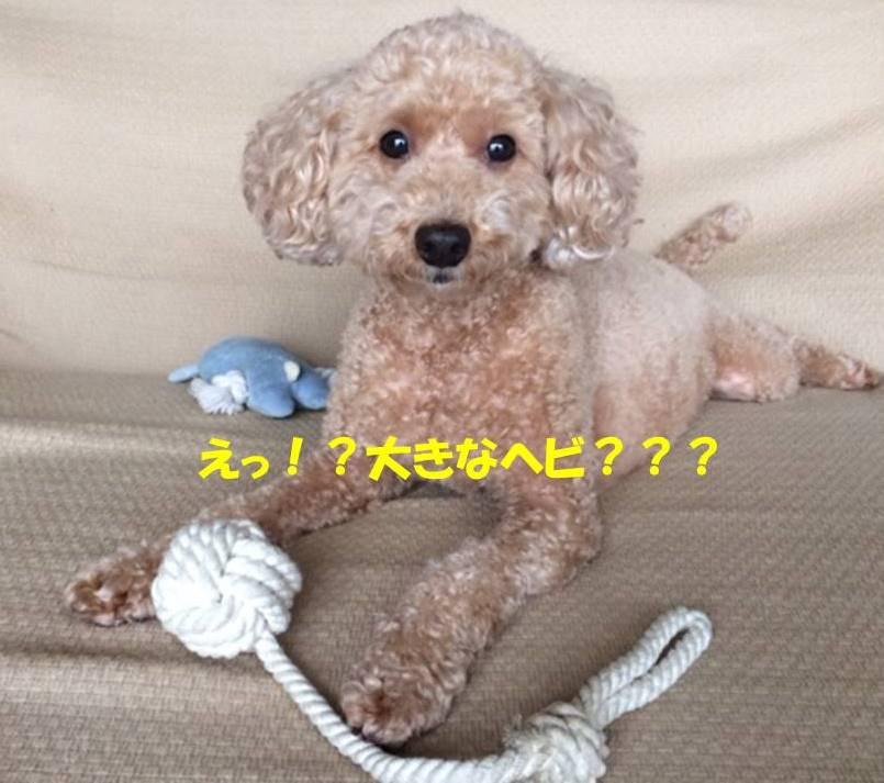 f:id:nanachan59:20171028141722j:plain
