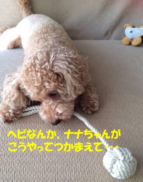 f:id:nanachan59:20171028142800j:plain