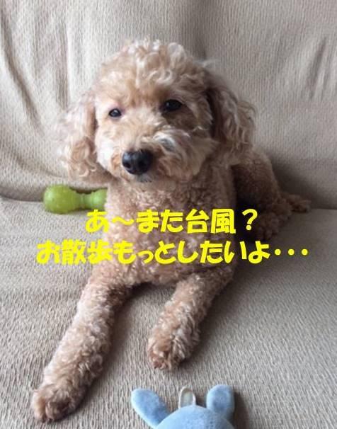 f:id:nanachan59:20171029191000j:plain