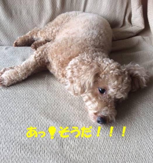 f:id:nanachan59:20171029191931j:plain