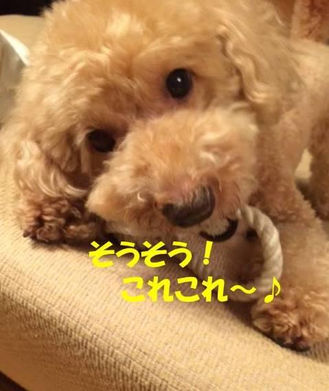 f:id:nanachan59:20171029193424j:plain