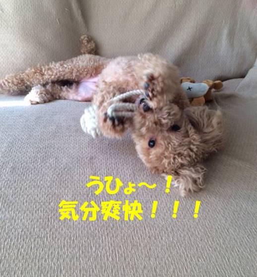 f:id:nanachan59:20171029194101j:plain