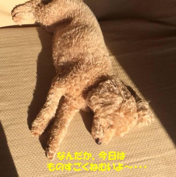 f:id:nanachan59:20171030181331j:plain