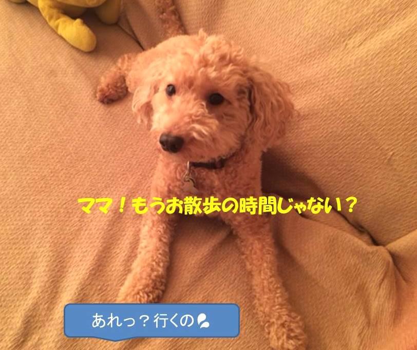 f:id:nanachan59:20171030203804j:plain