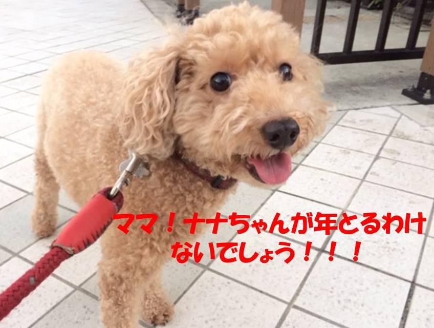 f:id:nanachan59:20171030204555j:plain